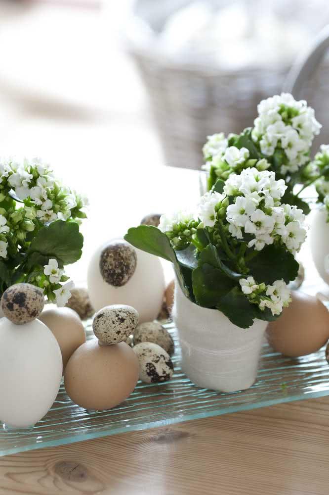 Flor da fortuna branca na decoração de páscoa