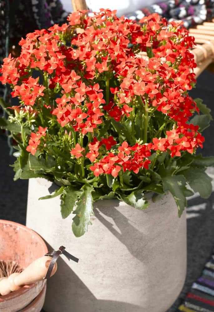 Flor da fortuna vermelha na decoração externa