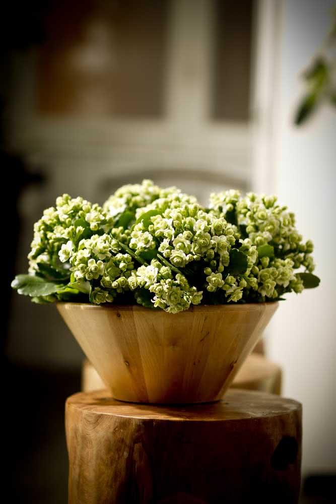Um arranjo rústico e elegante com a flor da fortuna branca