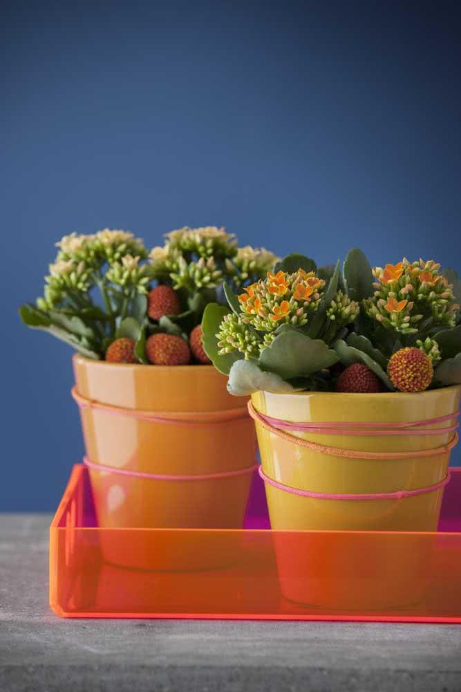 Vasinhos coloridos para flores igualmente coloridas