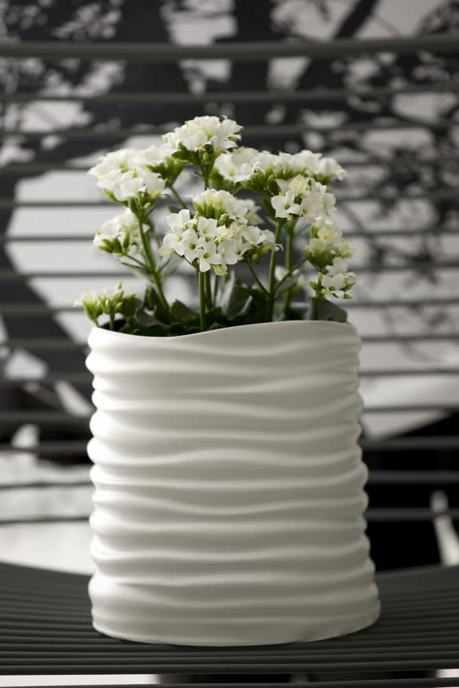 Vaso de cerâmica combinando com a flor da fortuna