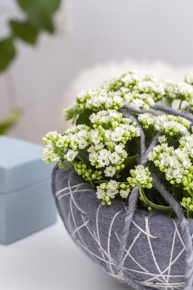 Flor da fortuna: ideal para jardineiros iniciantes