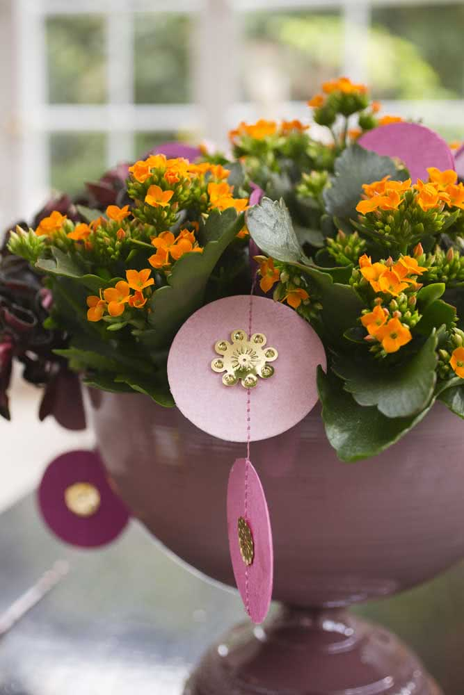 Colorida e divertida, a flor da fortuna laranja é pura energia