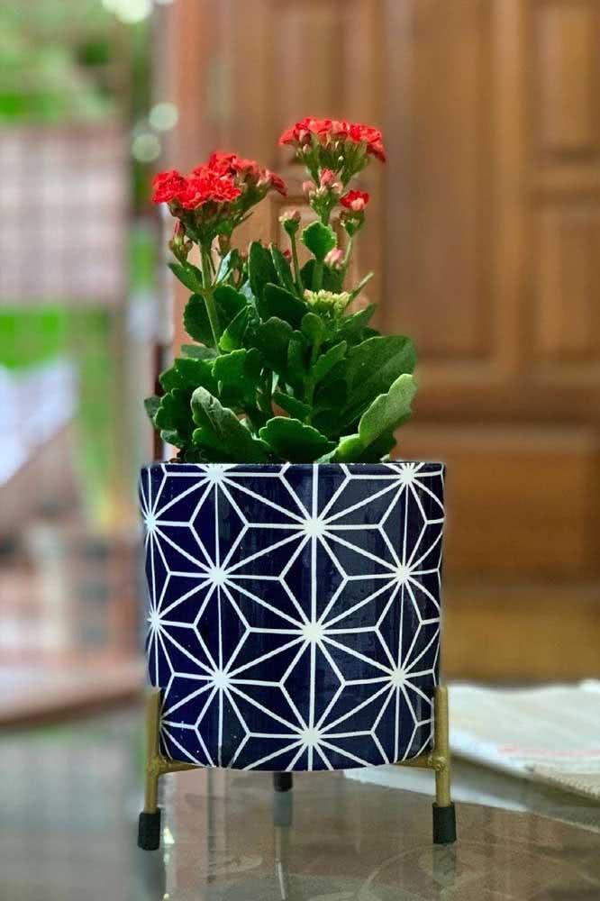 O lindo contraste entre a flor da fortuna vermelha e o vaso azul