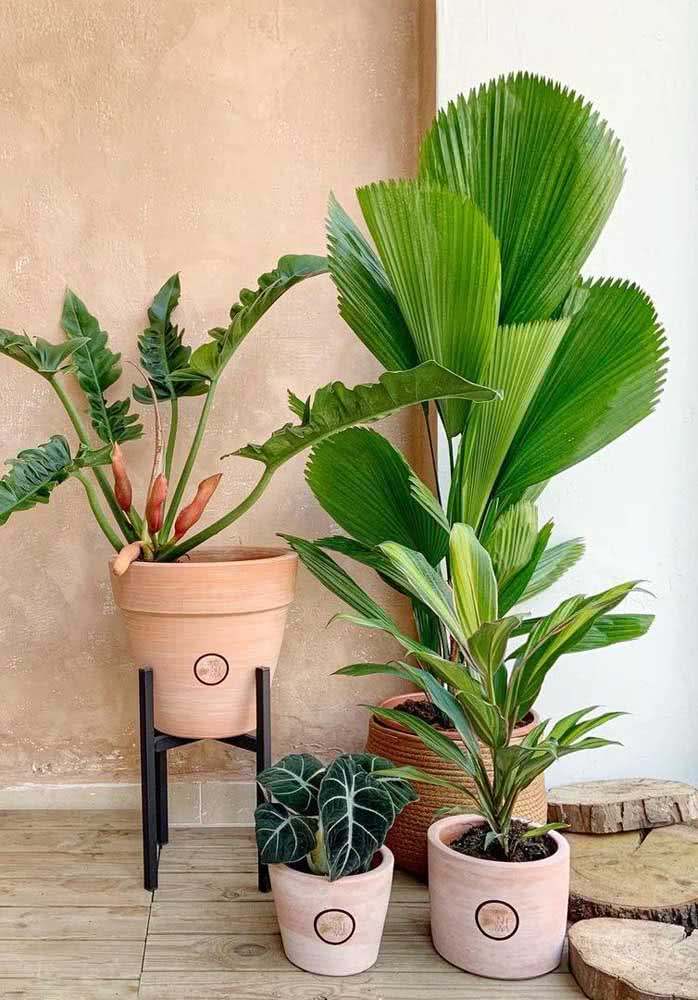 A urban jungle fica completa com a palmeira leque