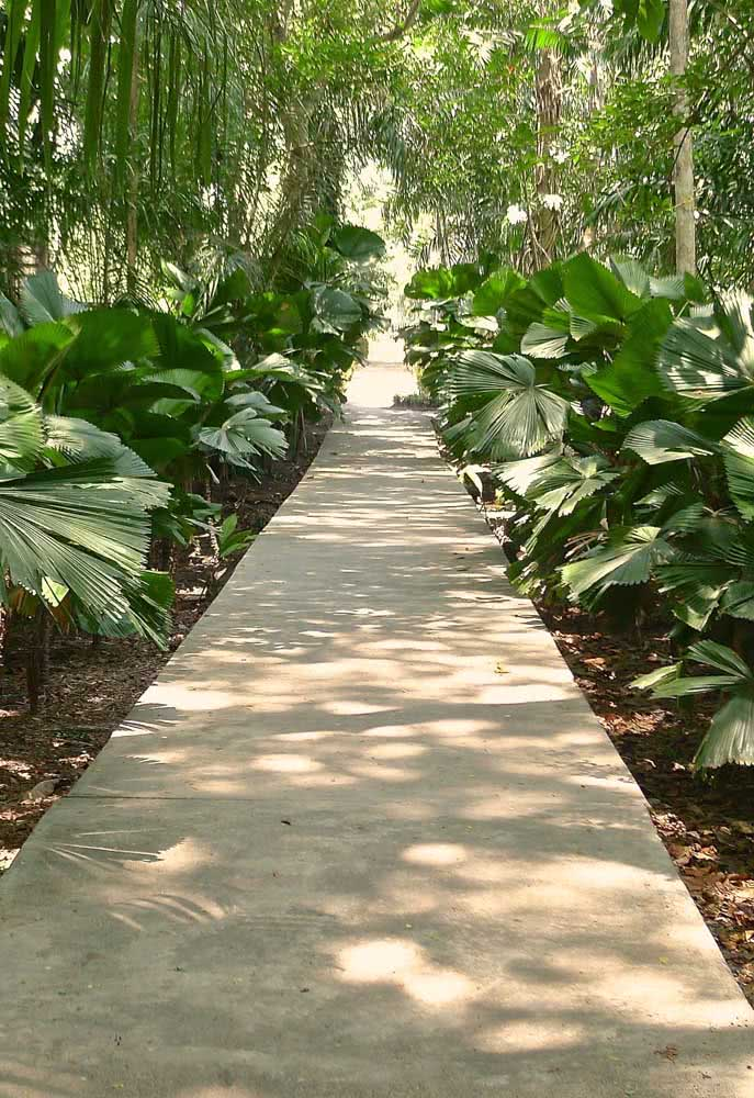 Jardim tropical com palmeiras leque