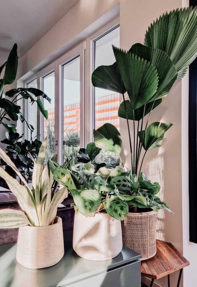 Que tal uma urban jungle na sala com a palmeira leque?