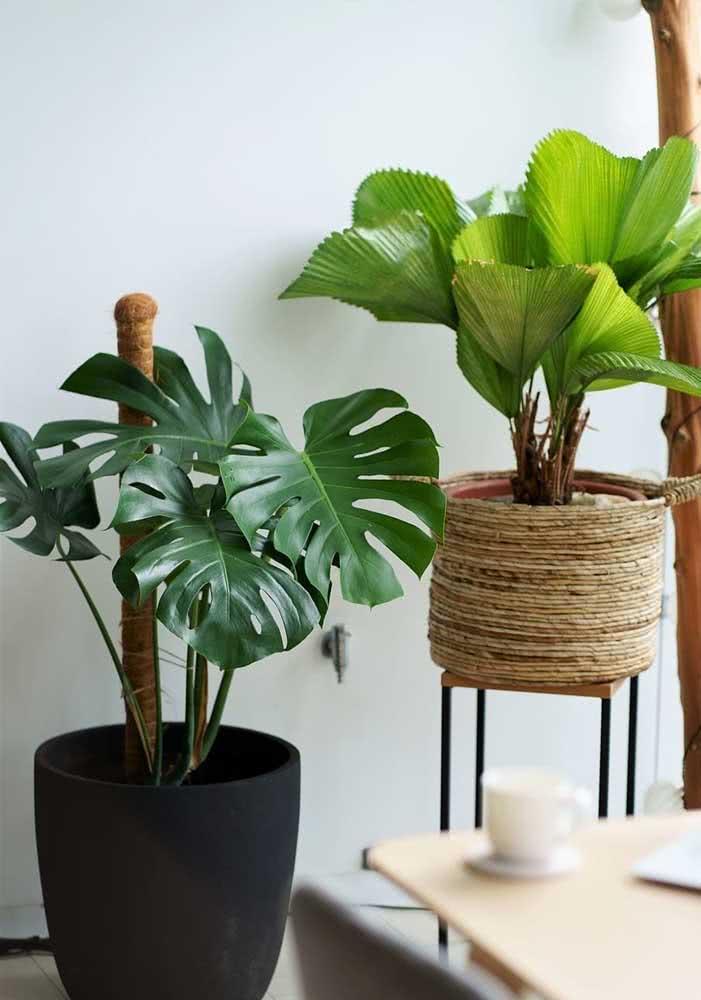 Vaso de corda sisal para garantir o clima rústico para a muda de palmeira leque