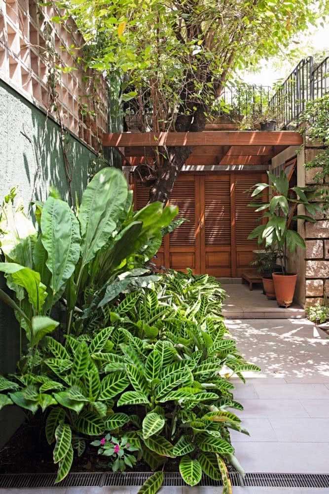 Jardim fácil de cuidar
